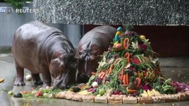 Bangkok: mega-torta di compleanno per i 51 anni dell'ippopotamo Mae Mali