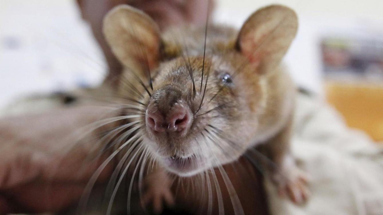 Roma, scuola infestata dai topi resta chiusa: non ci sono fondi per la pulizia