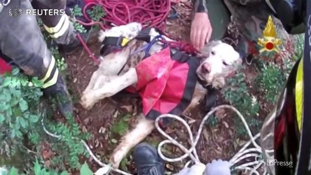 Cane precipita in un pozzo di 25 metri nel Vicentino, salvato dai pompieri
