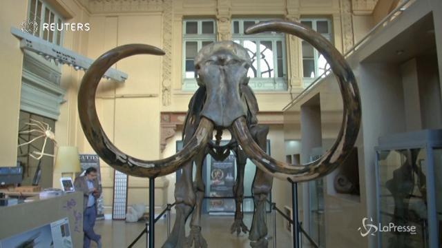 All'asta lo scheletro di un mammut di 15mila anni