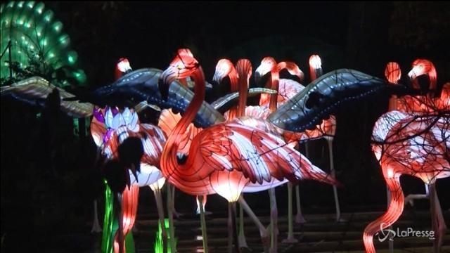 Le lanterne cinesi illuminano lo zoo di Edinburgo