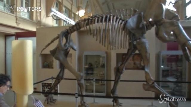 Mammuth all'asta: 548mila euro per il suo scheletro