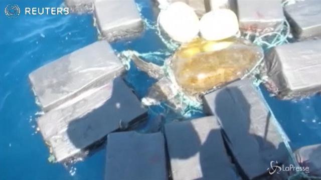 Florida, il corriere della droga è una tartaruga: intrappolata in 800 kg di cocaina
