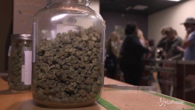 Cannabis, dal 2018 è legale in California