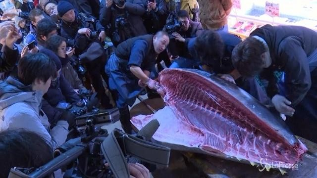 Tokyo, ultima asta nello storico mercato del pesce: venduto tonno gigante di 400 chili