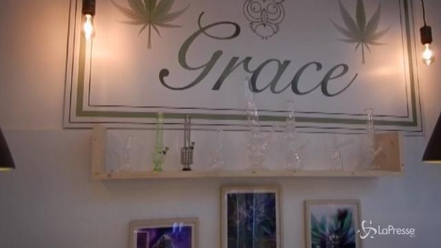 Roma, apre Grace: il negozio che vende marijuana legale
