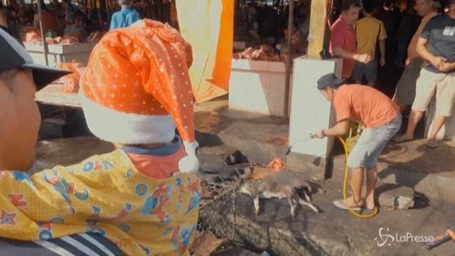 Immagini choc dall'Indonesia: cani bruciati vivi al mercato