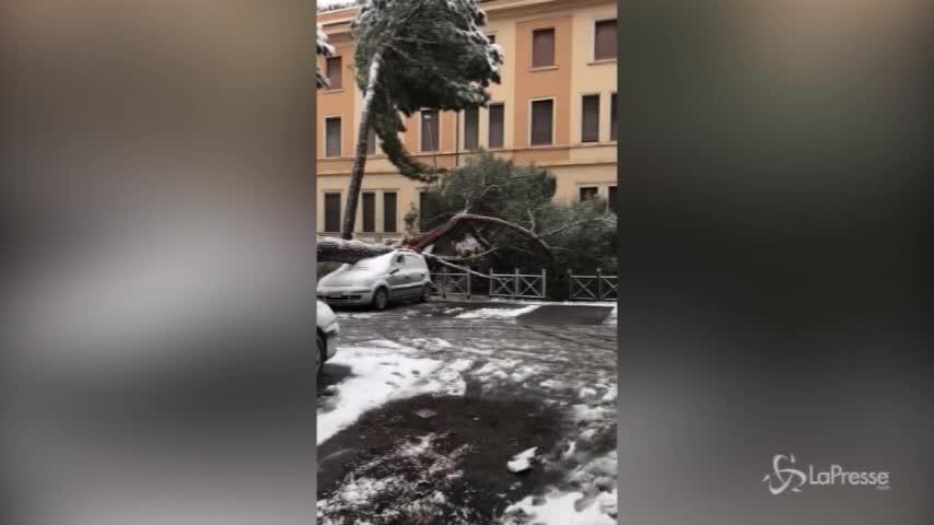 Neve a Roma: cade un albero sull'Appia nuova, auto distrutta