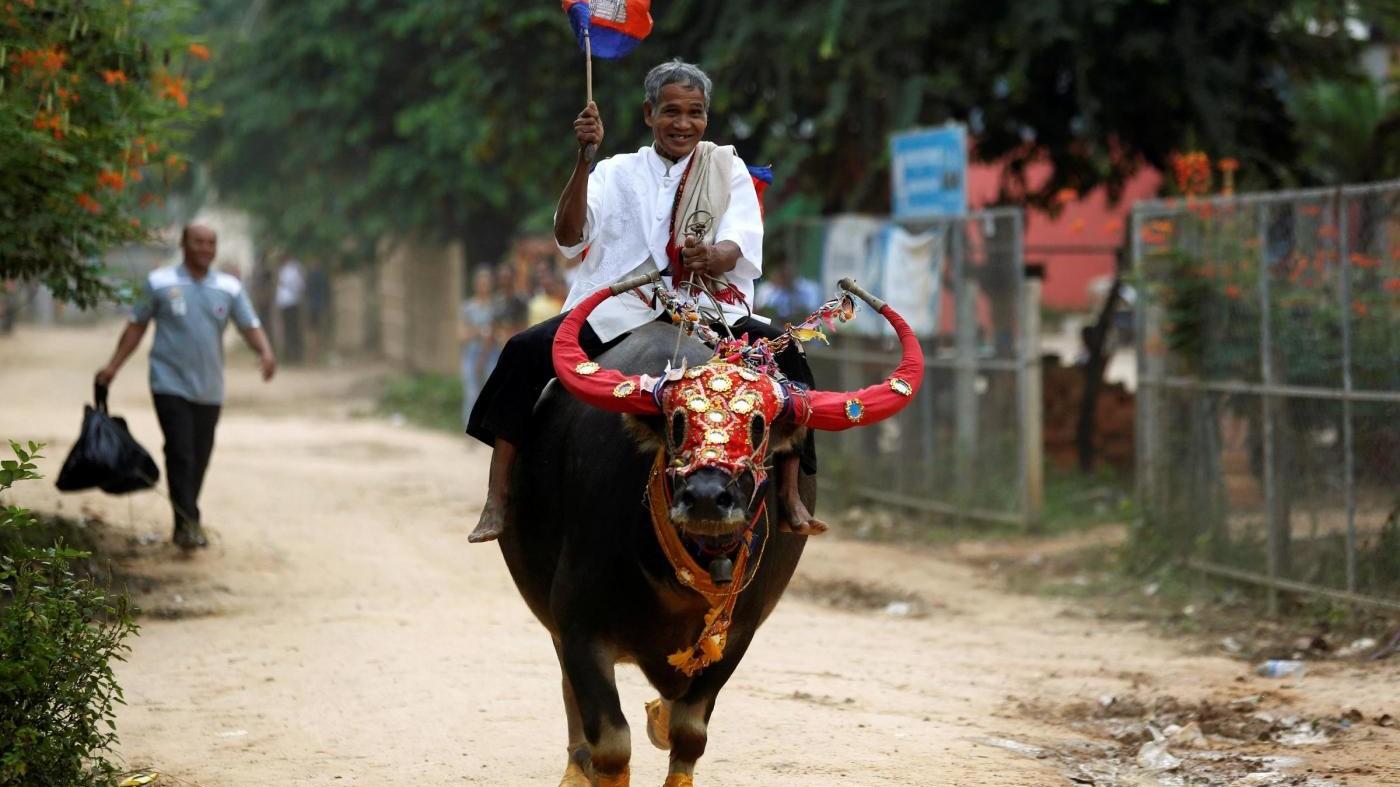 Pchum Ben, la corsa annuale dei bufali in Cambogia