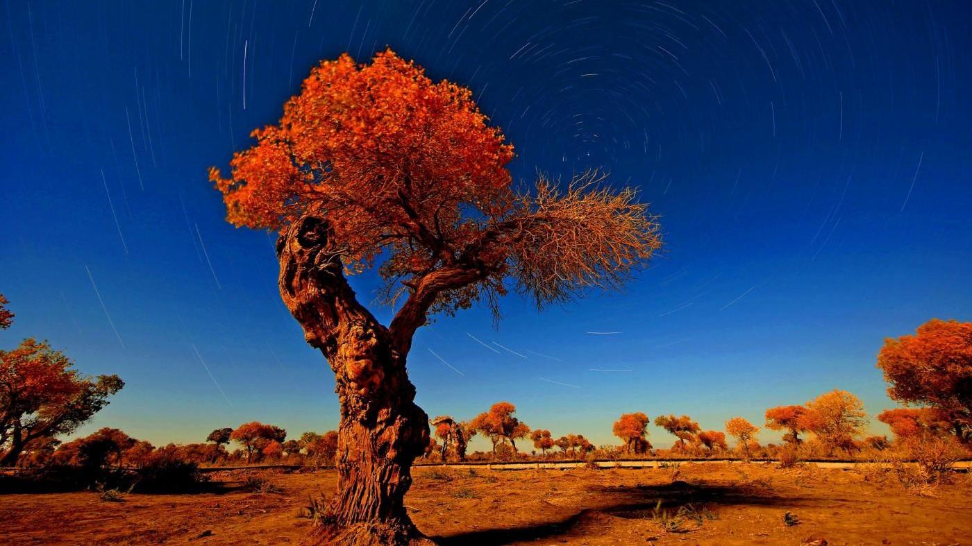 FOTO Cina, che meraviglia i colori dorati dell'autunno