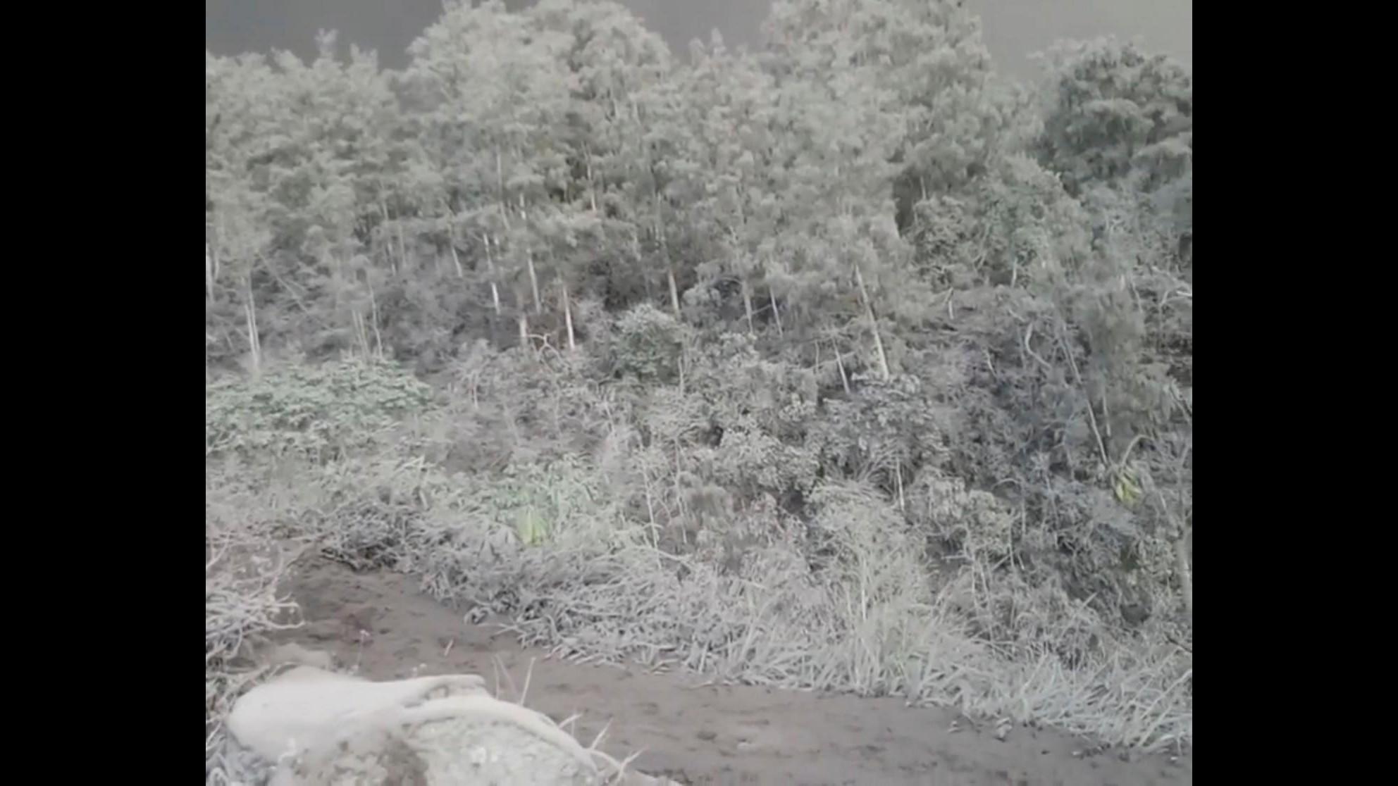 Agung, un mondo grigio di cenere dopo l'eruzione