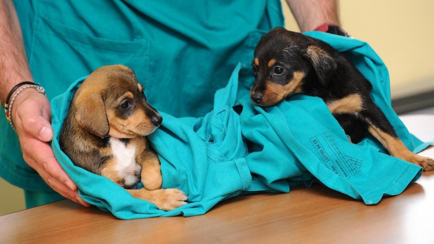Pesticidi nemici di cani e gatti: solo a luglio 3mila avvelenati