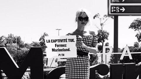Pamela Anderson si schiera con cetacei: Chiudete Marineland ad Antibes