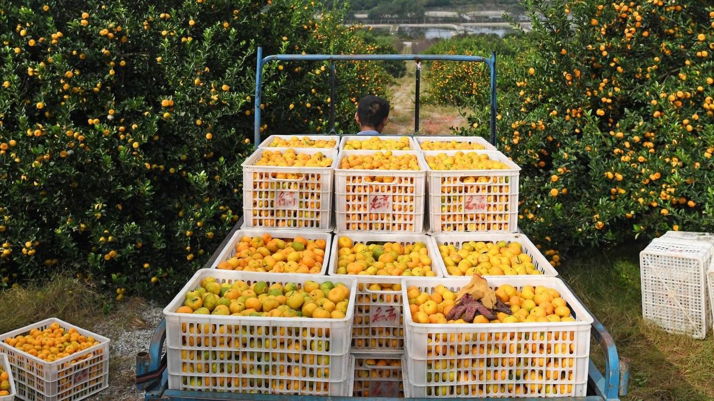 Il Sud riparte dall'agricoltura: occupazione giovanile +12,9%