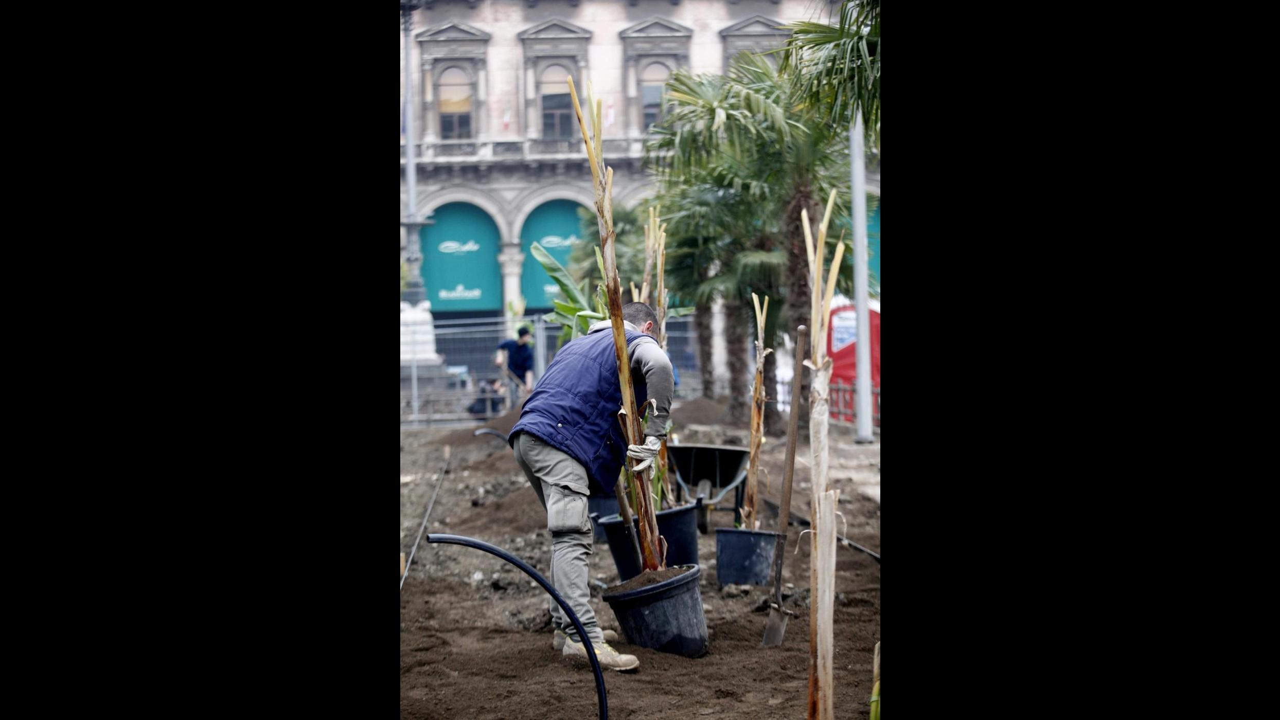 In piazza Duomo dopo le palme spuntano i banani