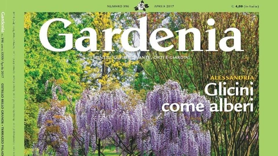 Con gardenia l 39 enciclopedia delle piante da giardino - Gardenia pianta da giardino ...