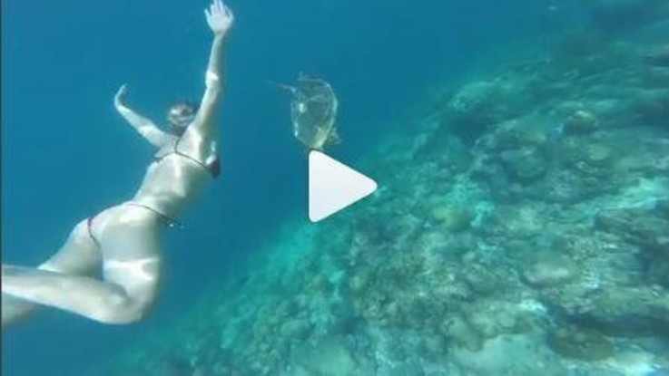 Federica Pellegrini nuota con le tartarughe alle Maldive/ VIDEO
