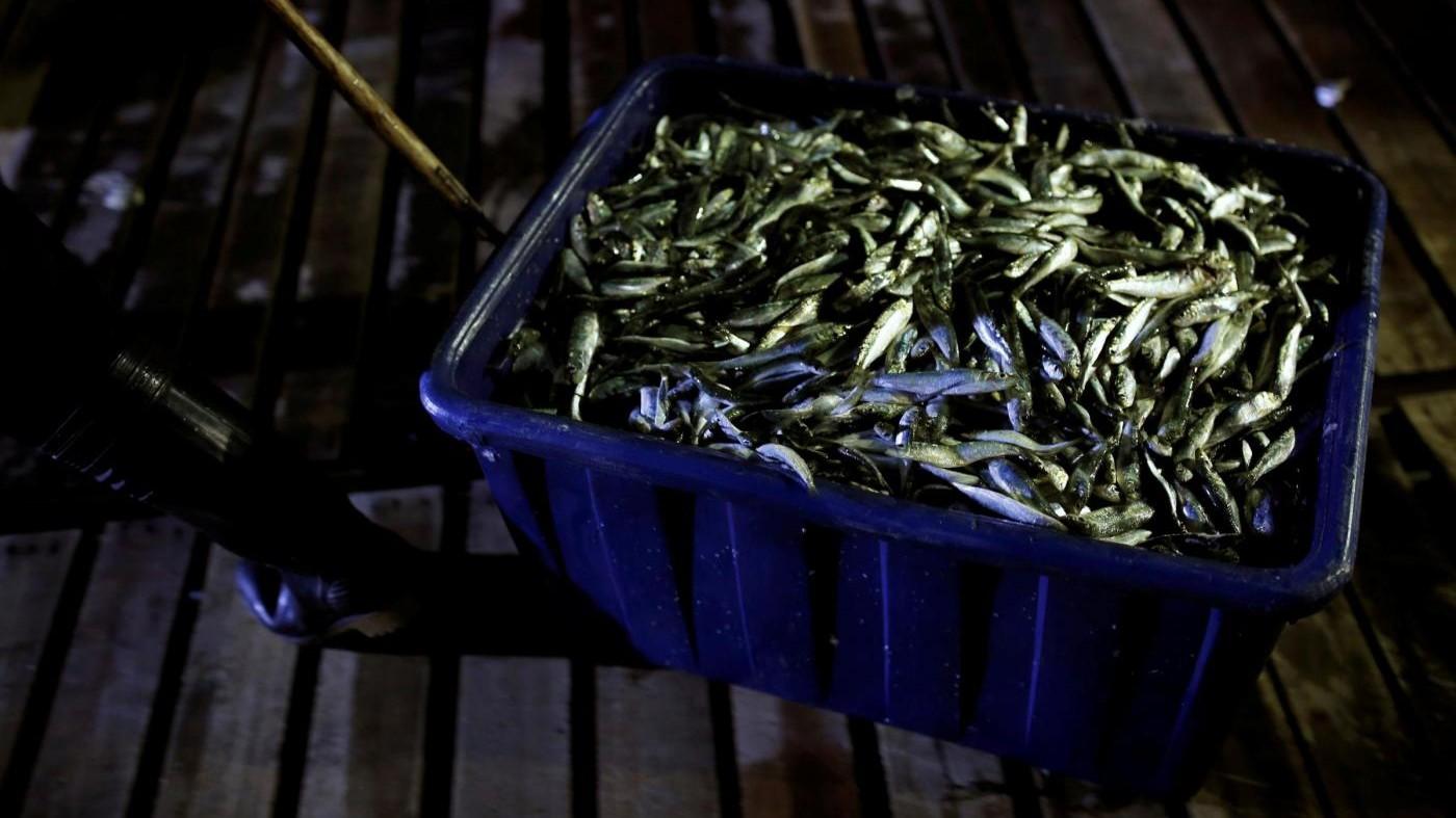 Taiwan, la pesca delle sardine attirate dalla luce del fuoco
