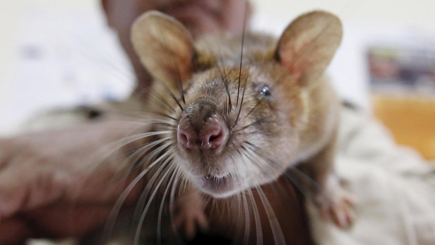 Abruzzo, insetti e topi trovati nei supermercati