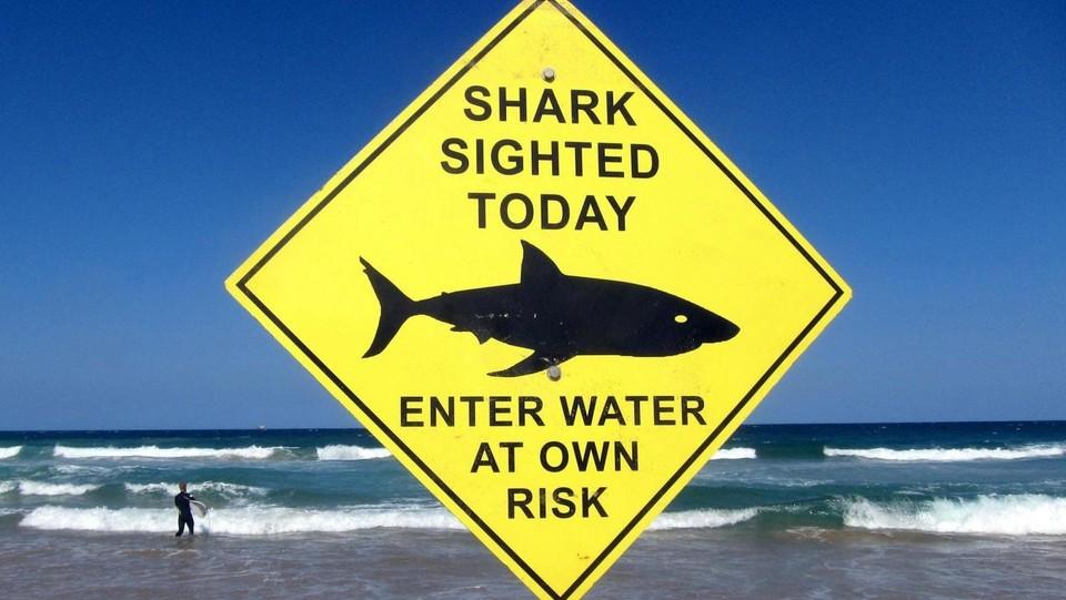 Contro gli squali dall'Australia arriva scudo elettromagnetico