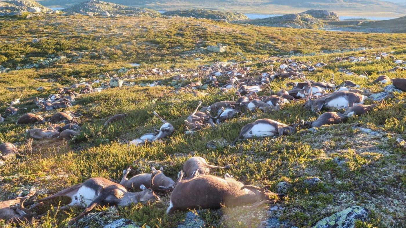 Norvegia, una tempesta di fulmine uccide più di 300 renne