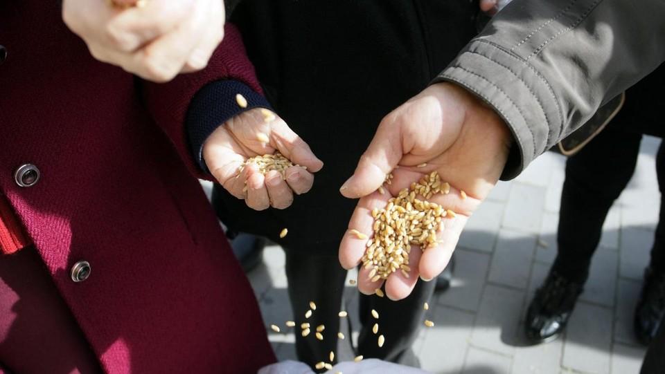 Ecco i marchi che assicurano il 100% di grano italiano
