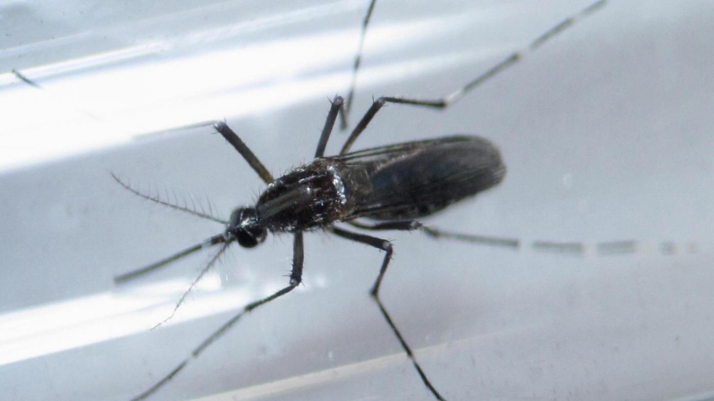L'allarme del Pentagono: 33 membri esercito infettati da Zika
