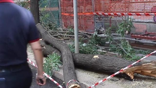 Milano, albero sradicato in viale Montello