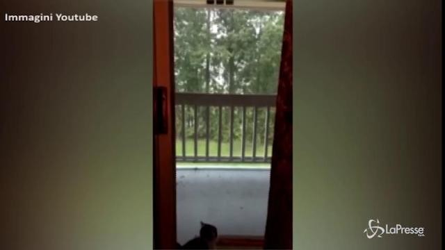 Il gattino guarda la pioggia, un fulmine lo terrorizza