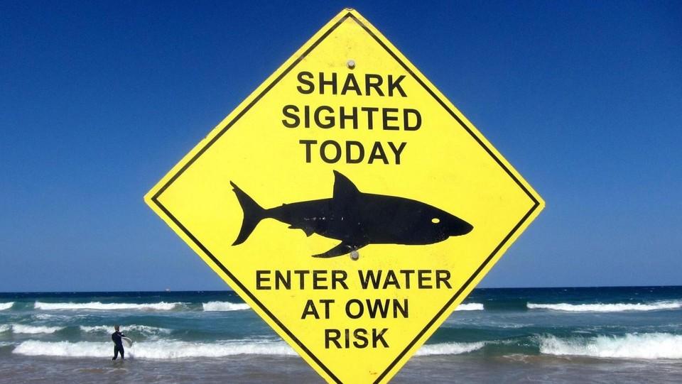 Australia, squalo di cinque metri sbrana una sub 60enne