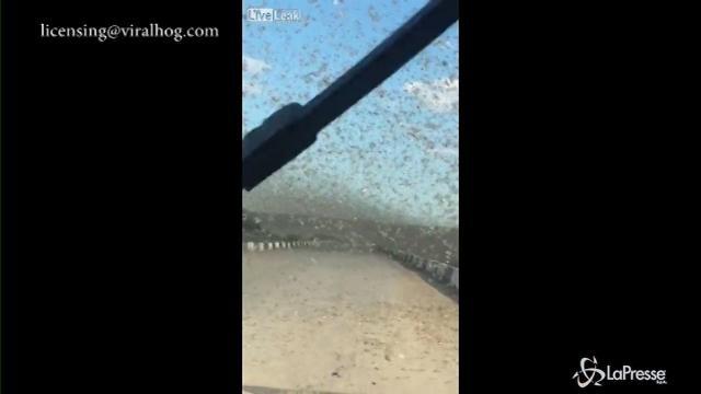 Kazakistan: auto in viaggio presa d'assalto dalle locuste