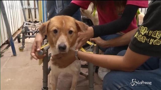 Taiwan: ecco l'ospedale per cani disabili