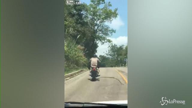 Il fallito agguato di un serpente a un motociclista