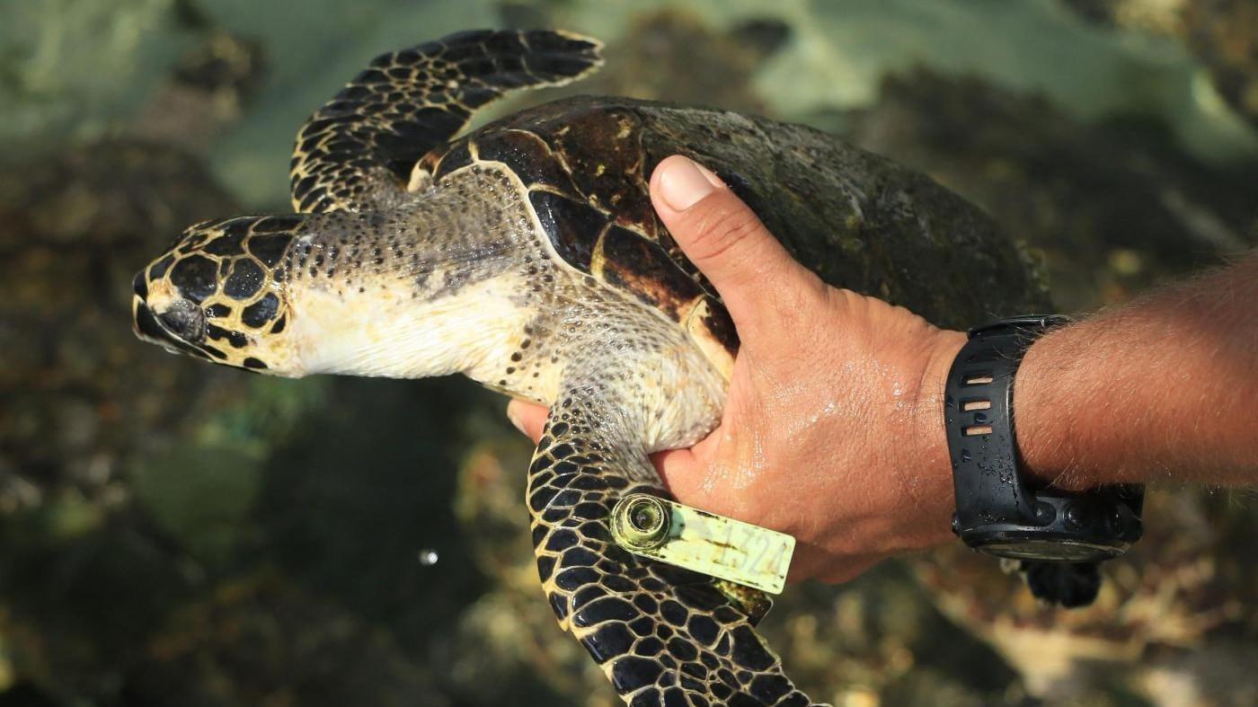 Ogni anno 500 tartarughe marine curate e salvate dal Wwf