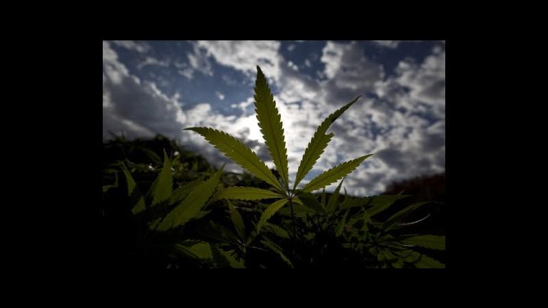 Usa, aumenta consumo marijuana ma scende quello di altri stupefacenti