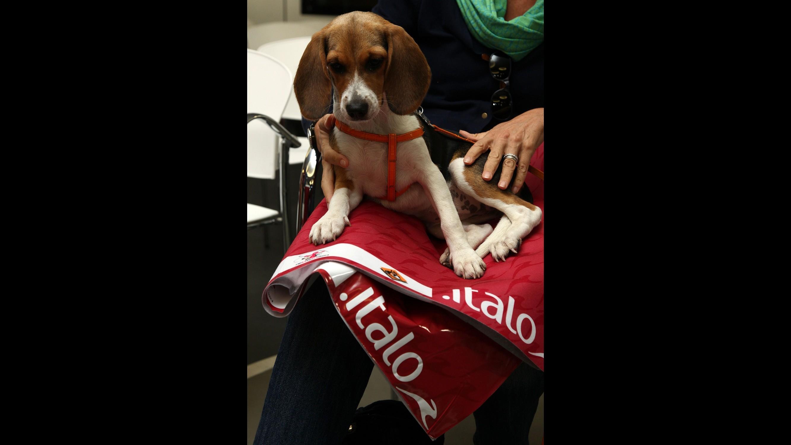 Italo lancia nuovo servizio: cani ammessi su treni alta velocità