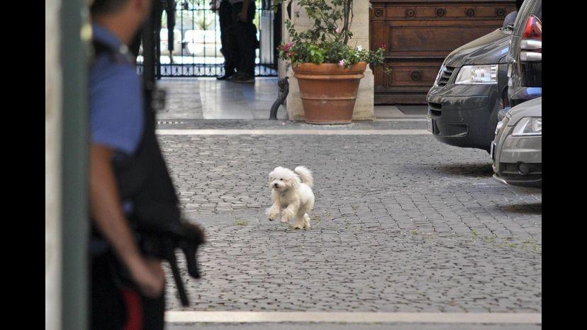 Esercito di Silvio lancia 'Amici di Dudù': cane più simpatico vince book da fotografo dei vip