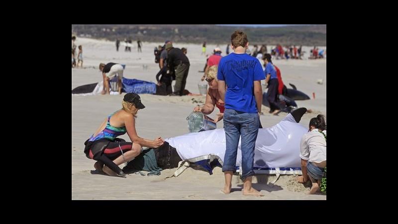 Sudafrica, 19 balene spiaggiate sulla costa di Città del Capo