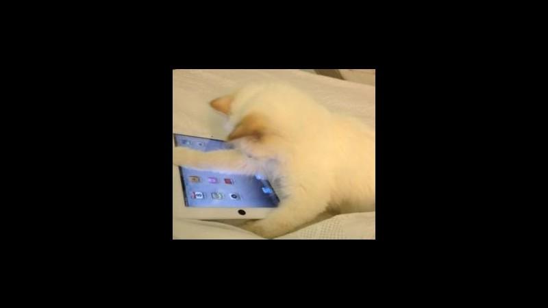 Karl Lagerfeld: Sono innamorato della mia gatta e vorrei sposarla