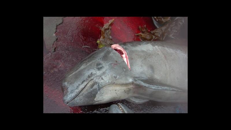 Caccia balene, via udienze all'Aia. Australia: Tokyo mente su scopi
