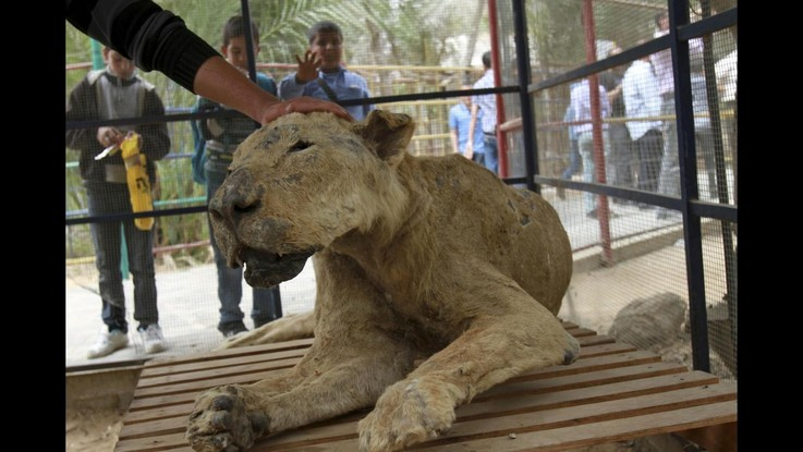 Gaza, guerra lascia conseguenze anche per animali: problemi allo zoo