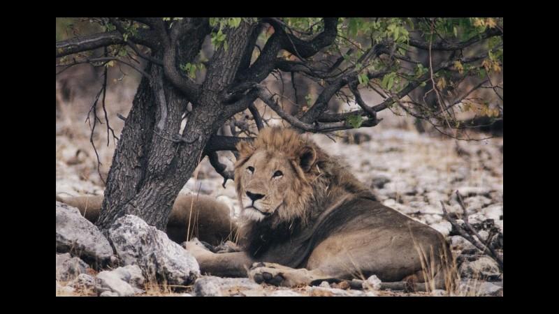 Caccia all'estero, Enpa: Governo metta fuori legge il turismo venatorio
