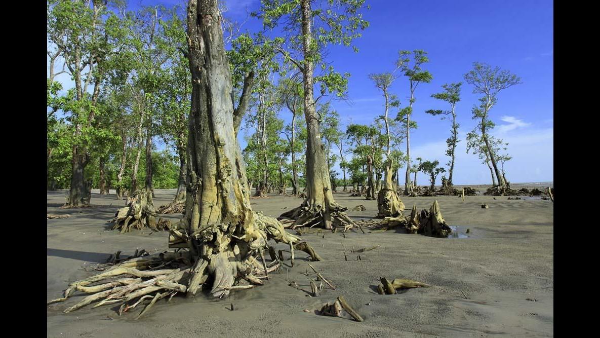 Studio: Area foreste tropicali pari a India scomparirà entro 2050