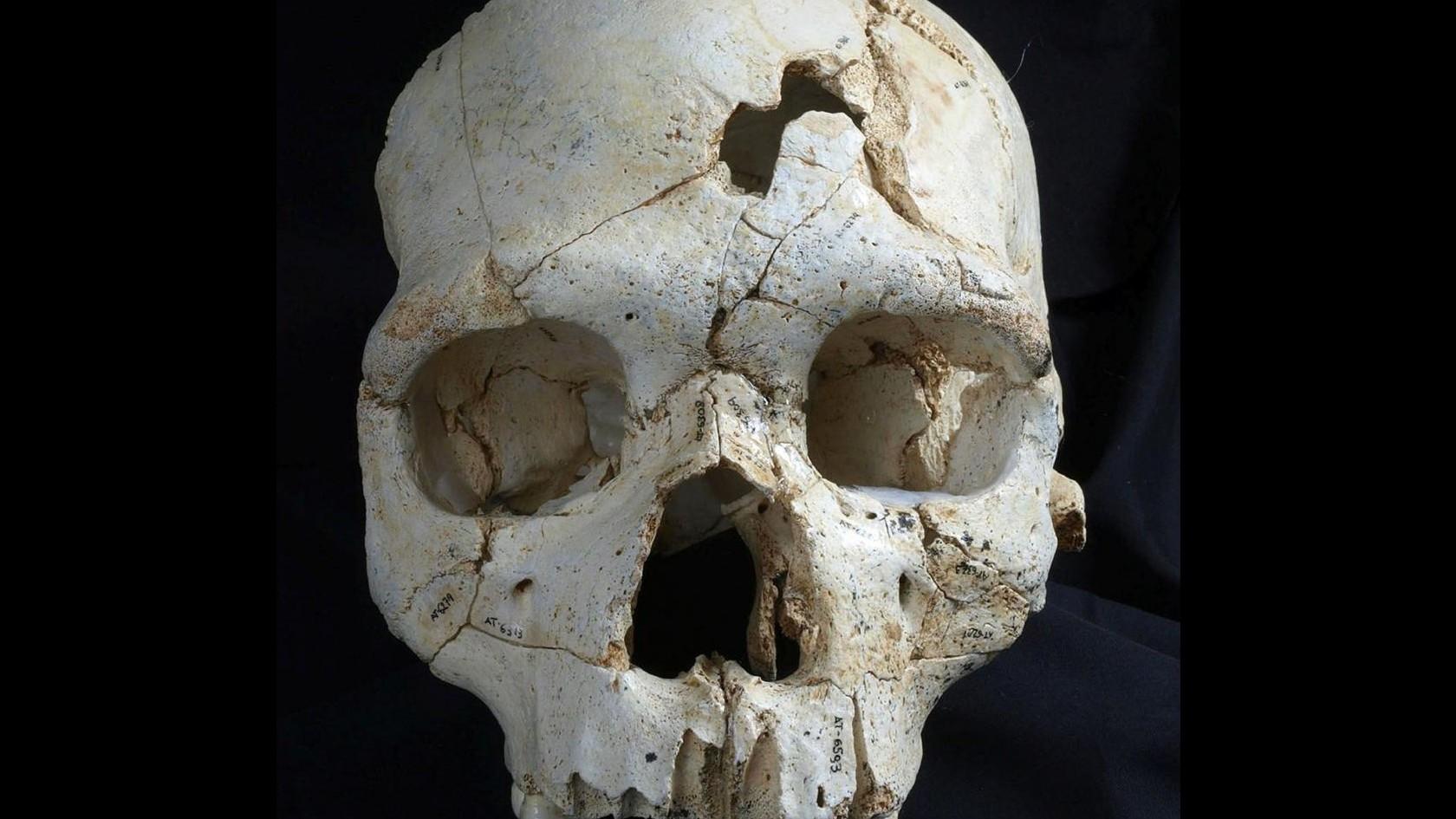 Ricostruito primo omicidio della storia: risale a 430mila anni fa