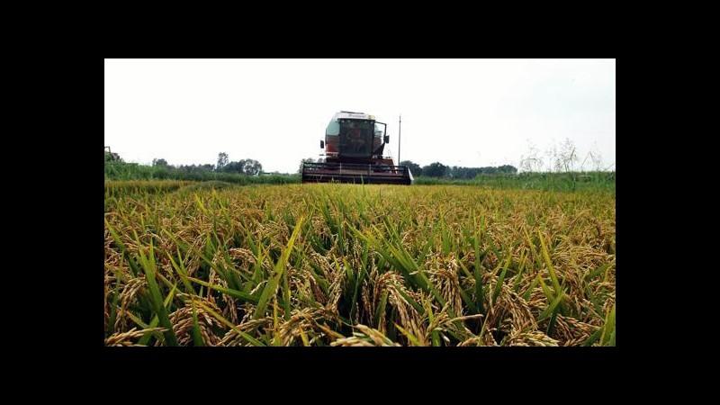 Expo, Italia leader europea coltivazione riso grazie alla biodiversità
