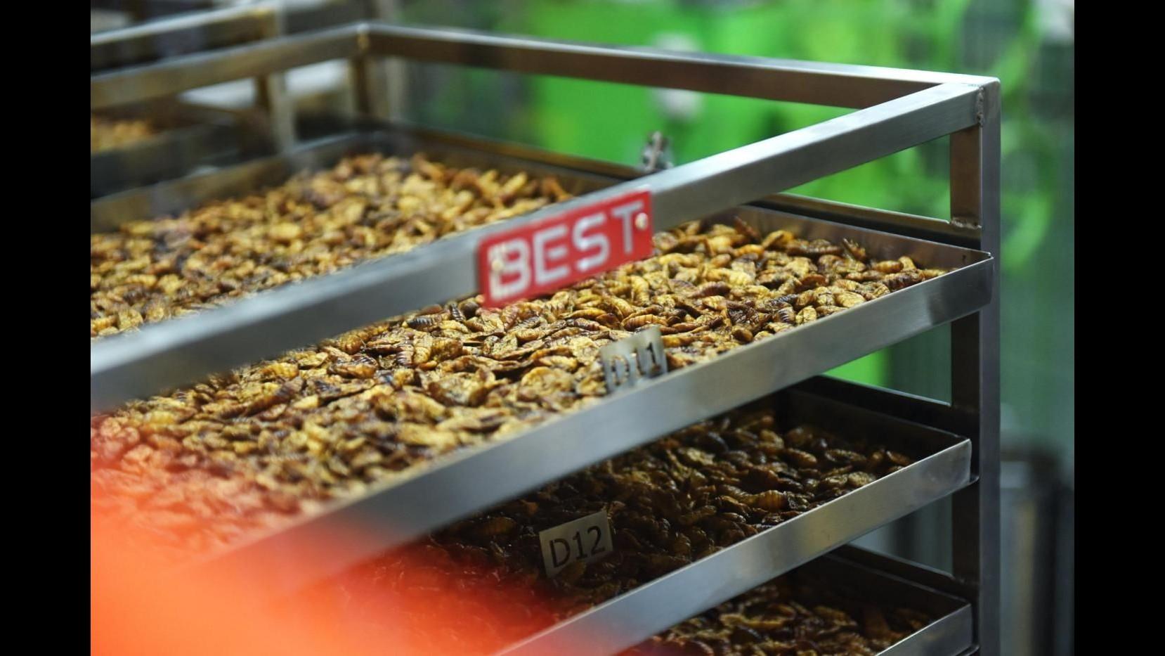 Ue, Coldiretti: Via libera insetti a tavola interessa solo 8% italiani