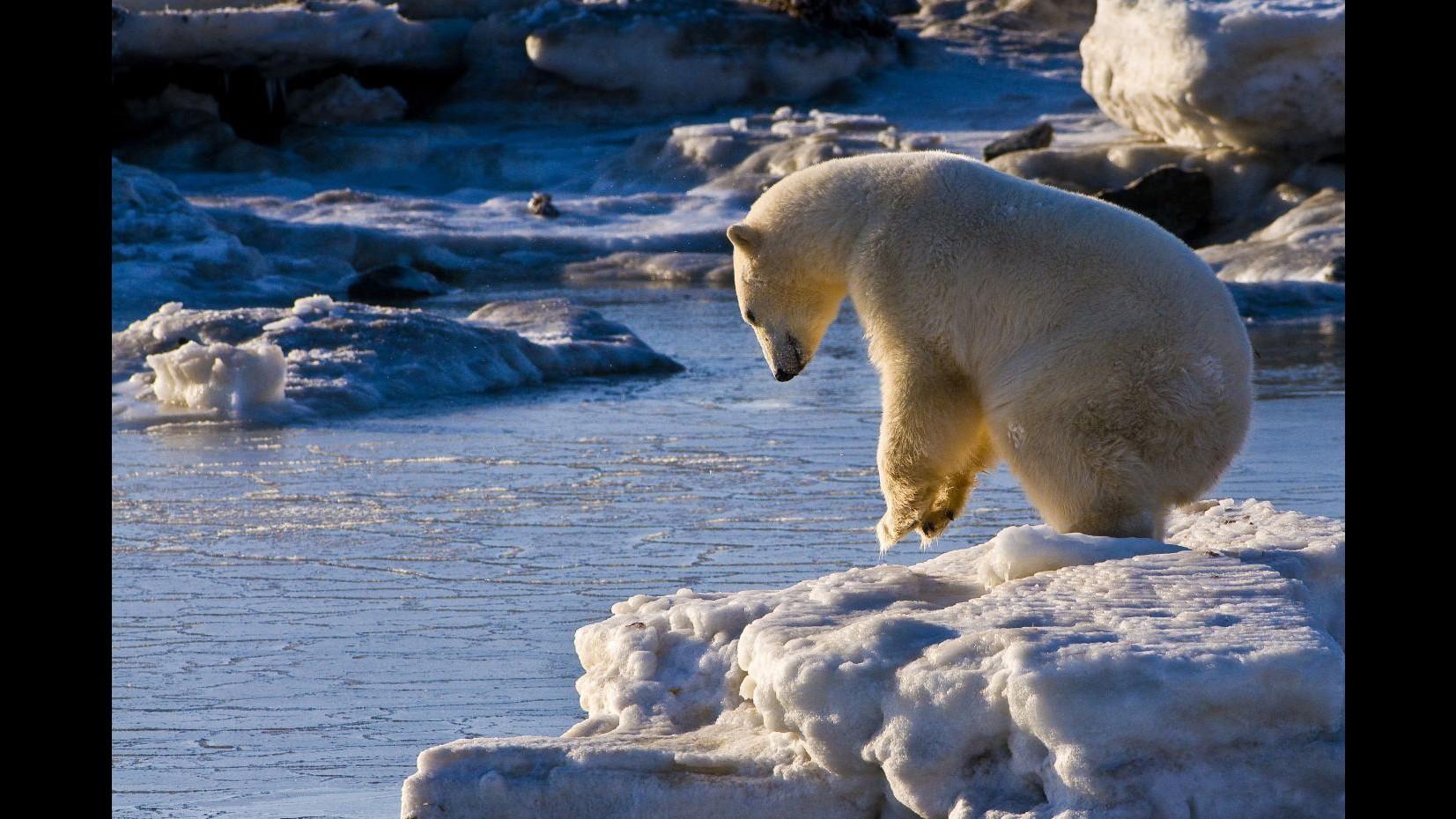 Allarme Groenlandia, ghiacciaio si scioglie: rischio aumento mari