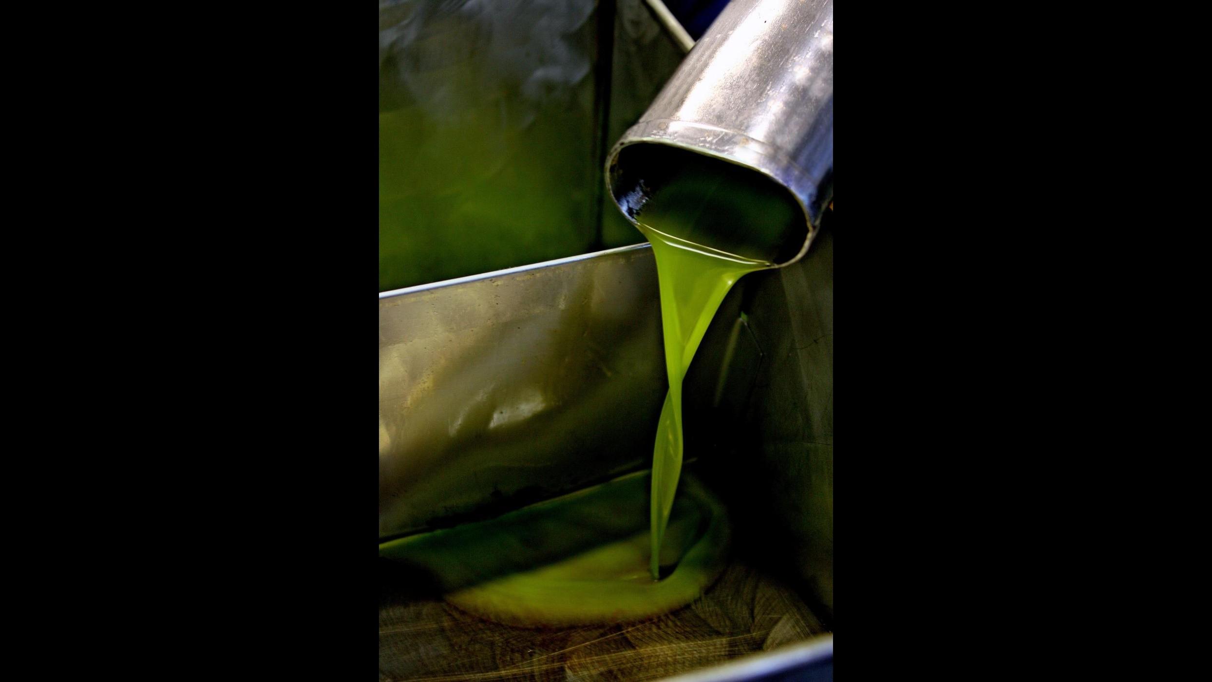 Coldiretti:Difendere da frodi 400mila tonnellate di olio Made in Italy
