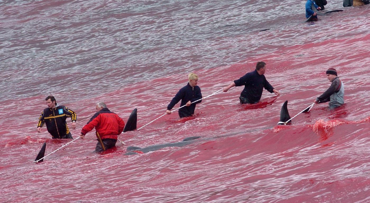 Giappone, da oggi riprende la caccia alle balene in Antartico