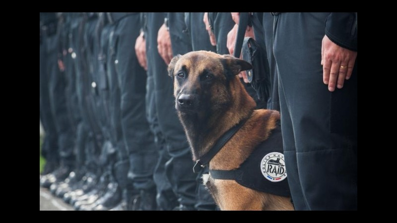 Parigi, medaglia al valore a Diesel, cane del blitz Saint-Denis